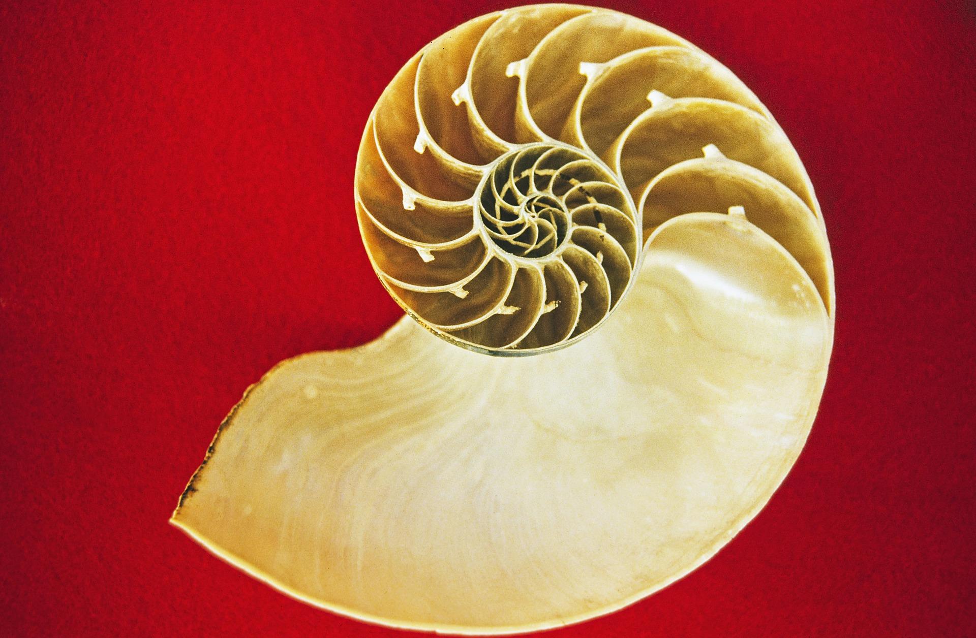 nautilus-68941_1920